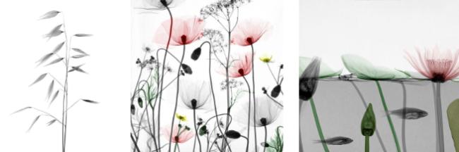 Verträumtes, minimalistisches Motiv