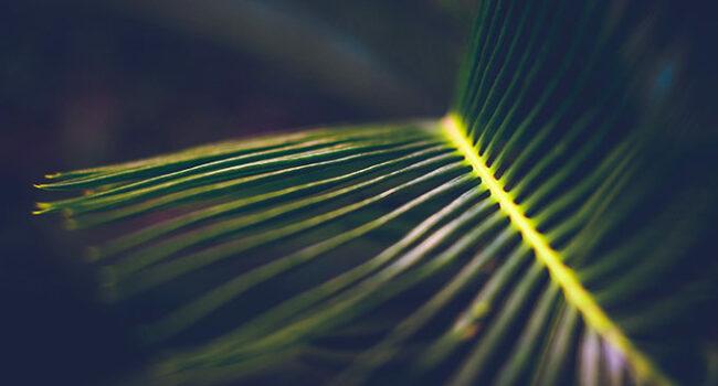 Schals Mit Naturprint